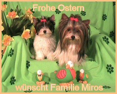 An den Beitrag angehängtes Bild: http://www.hundezucht-miros.de/Ostern2008.JPG