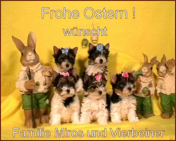 An den Beitrag angehängtes Bild: http://www.hundezucht-miros.de/Ostern2011GB.jpg