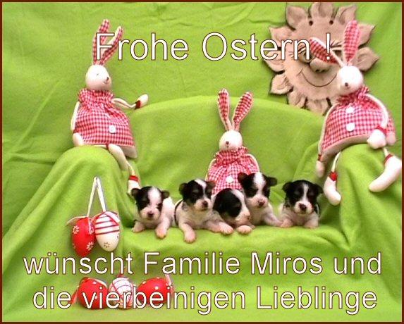 An den Beitrag angehängtes Bild: http://www.hundezucht-miros.de/OSTERNGB2012.jpg