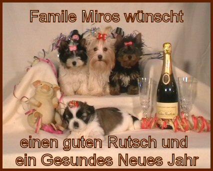 An den Beitrag angehängtes Bild: http://www.hundezucht-miros.de/Silvester2009GB.jpg