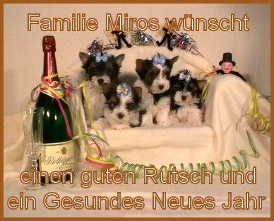 An den Beitrag angehängtes Bild: http://www.hundezucht-miros.de/Silvester2010GB.jpg