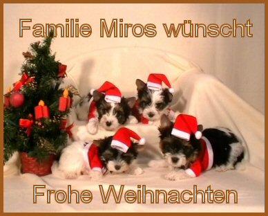 An den Beitrag angehängtes Bild: http://www.hundezucht-miros.de/Weihn2010GB.jpg