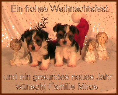An den Beitrag angehängtes Bild: http://www.hundezucht-miros.de/weihn2007gb.jpg
